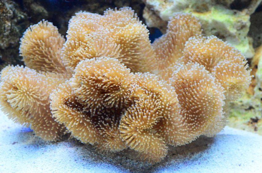 Blanqueamiento de los arrecifes de coral