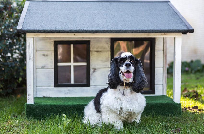 Construye una casa para perro