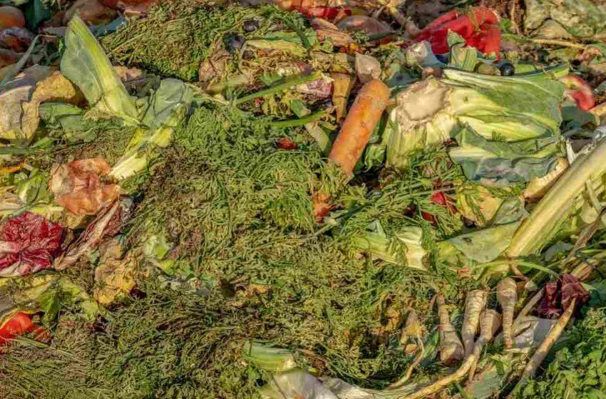 Nueva vida a los residuos agroalimentarios