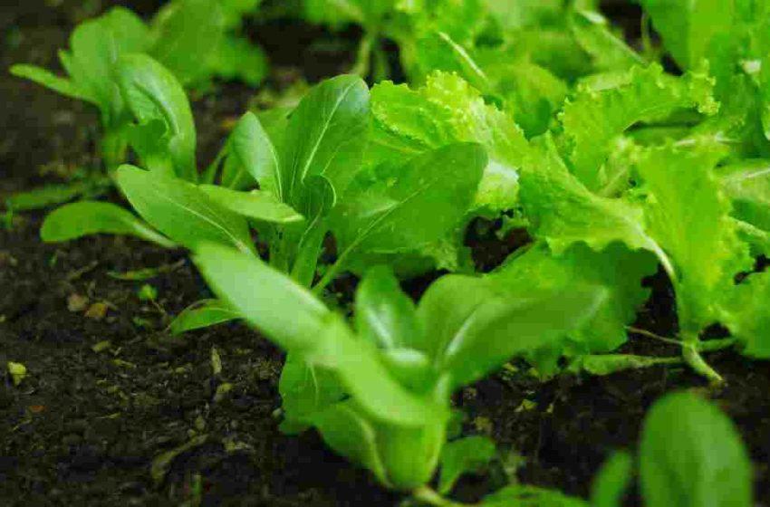 Agroecología y alimentación saludable
