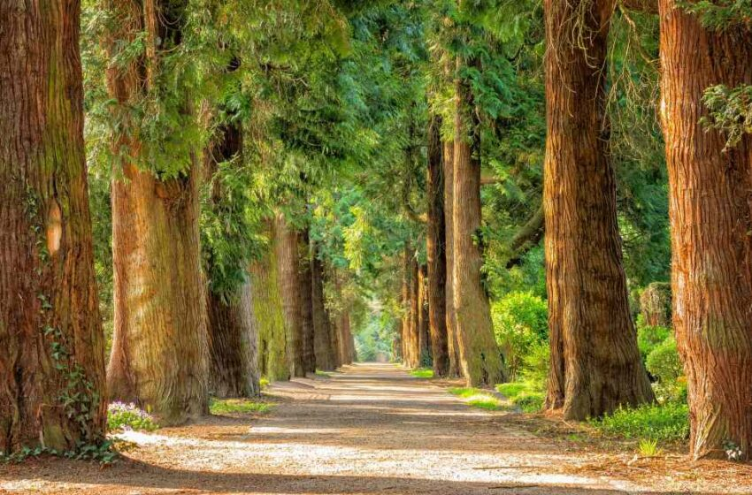 Etiopía reforesta millones de árboles