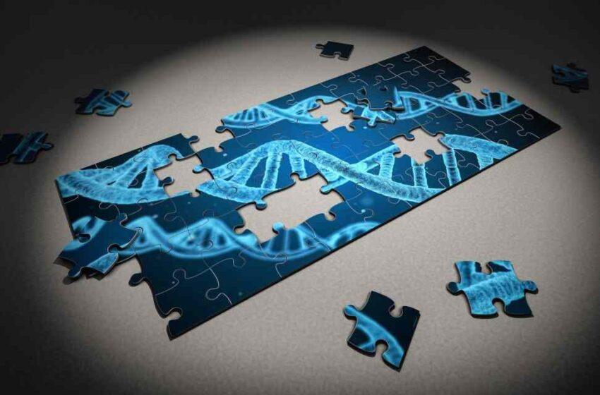 La genética da pistas de la evolución