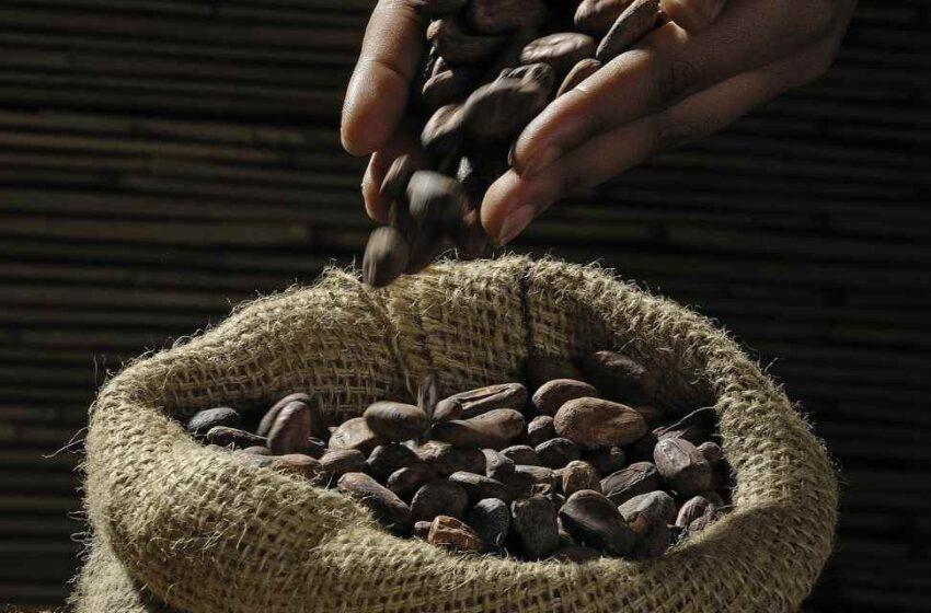 El cacao regalo de los dioses