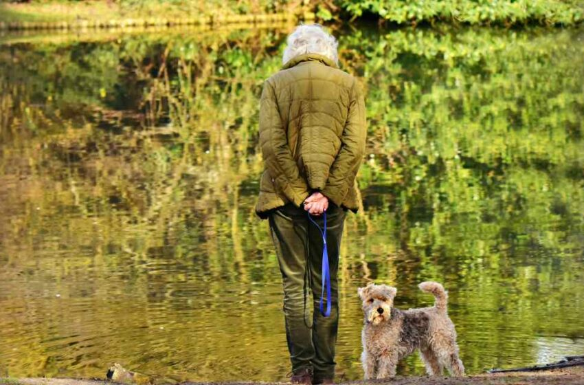 Adultos mayores y mascotas