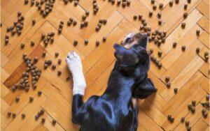 comida de mascotas