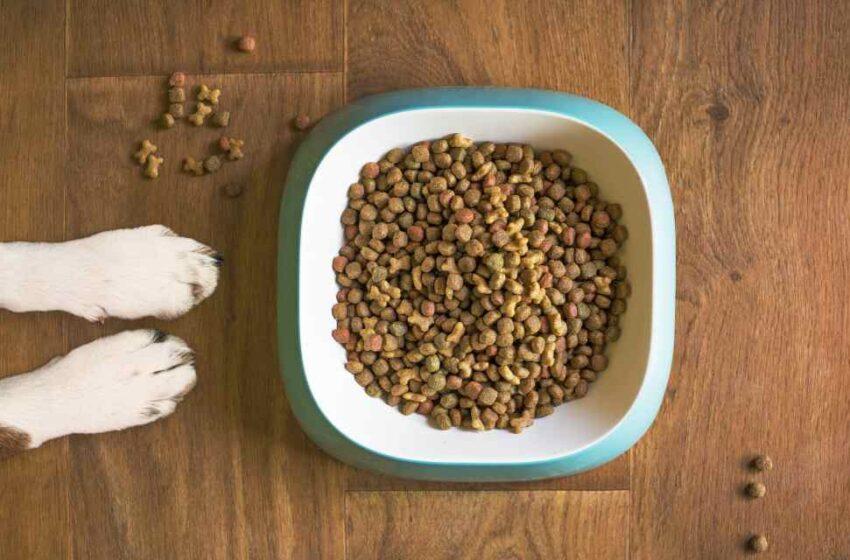 La comida de mascotas y CO2