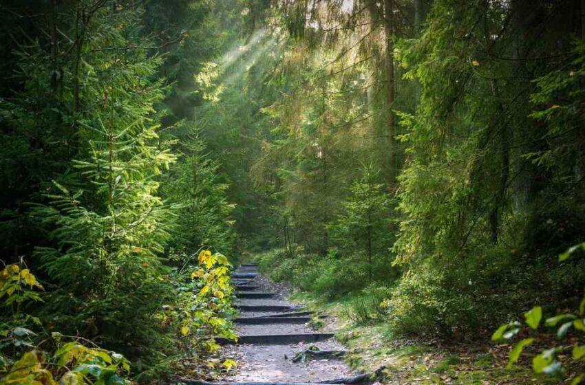 Bosque subterráneo para proteger África