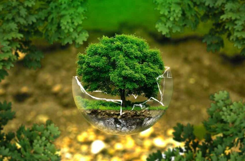 Emprendedores ambientales reciben el premio