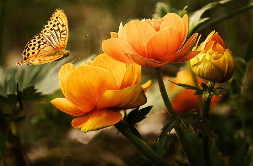 El CICY muestra flora y fauna yucateca
